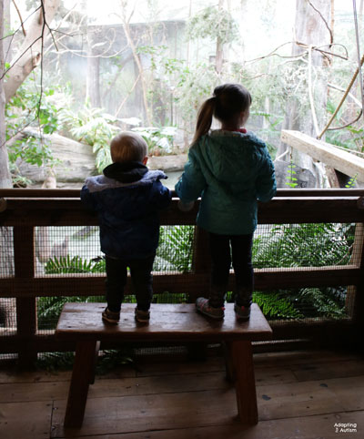 photo of kids at zoo
